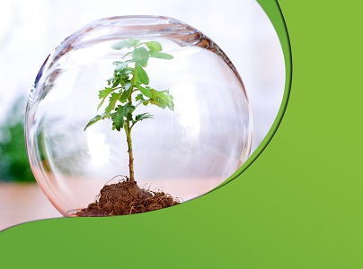 Save Trees Essay in Hindi