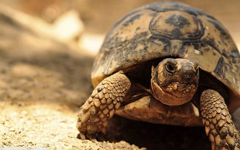 Short Essay on Tortoise in Hindi