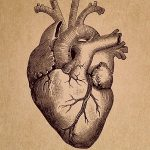 Essay on Human Heart in Hindi
