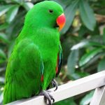 Short Essay on Parrot in Hindi Language