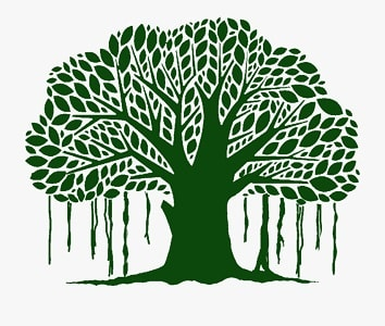 Essay on National Tree of India in Hindi